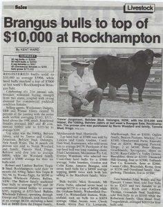 1997 QCL Article Rockhampton Brangus Sale sale top