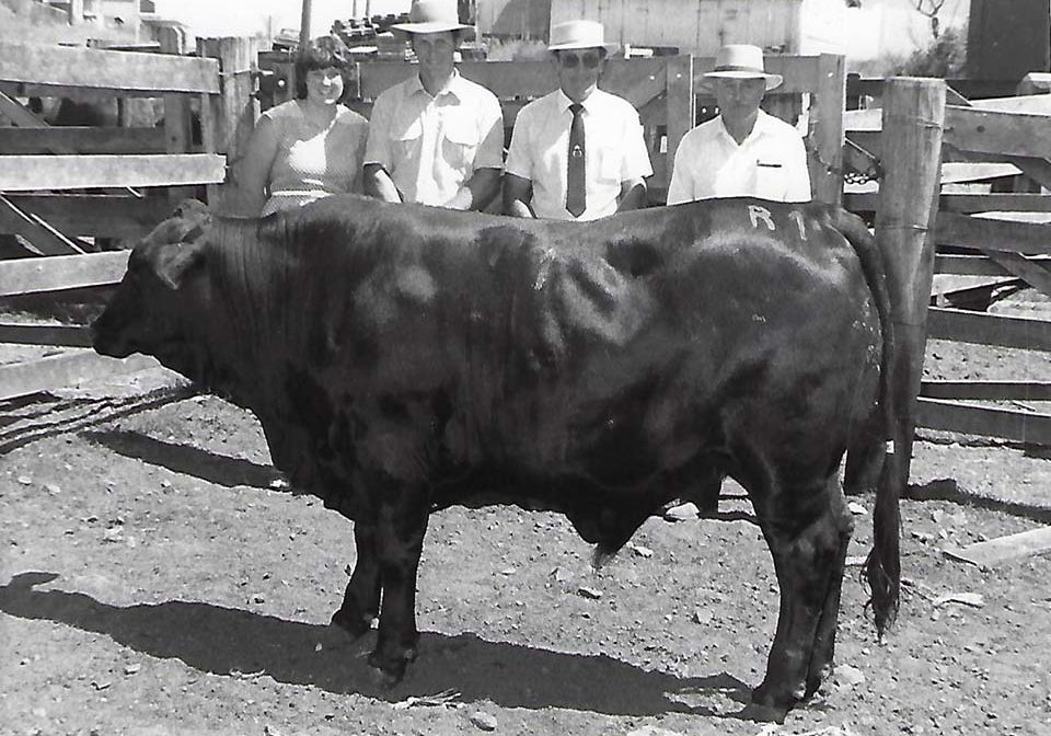 Champion Beast of the Kyogle Fat Cattle Show 1983